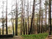 Сдам в аренду дом для летнего отдыха в сосновом лесу возле Днепра вбли