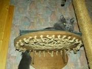 Тренажер домик для кота - дерево-когтеточка.