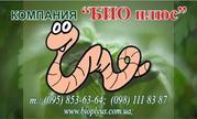 Компания  БИОПЛЮС продает недорого  маточное поголовье  червясемья чер