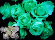 Светящиеся цветы / Люминесцентная краска / Бизнес от Noxton