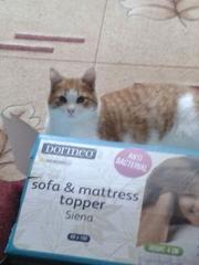 красивые котята 5 месяцев,  мальчики.
