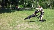 Дрессировка собак в городе Черкассы