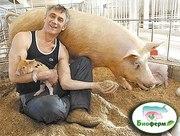 Ферментационная подстилка Биоферм для животных и птиц Украина