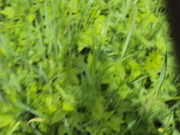Продам земельну ділянку сільськогосподарського призначення
