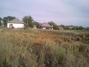 дача в селе Кедина Гора  старый дом с участком и огородом 37 соток